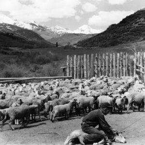 Sheep Ranch, Brush Creek - Ferenc Berko