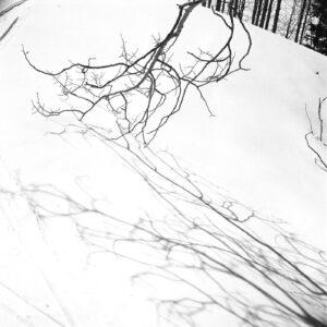 Tree Shadows- Ferenc Berko