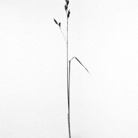 Weed Series - Ferenc Berko